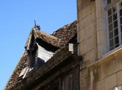 Fonds d'écran Voyages : Europe dijon, le chat sur le toit