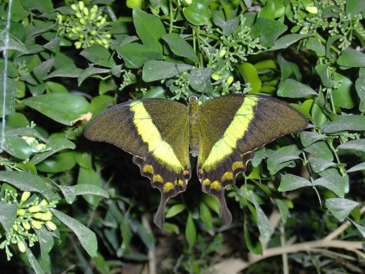 Wallpapers Animals Insects - Butterflies Un joli papillon
