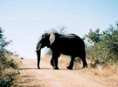Fonds d'écran Voyages : Afrique Image sans titre N°153373