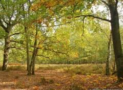 Fonds d'écran Nature Après-midi d'automne en forêt de Rambouillet
