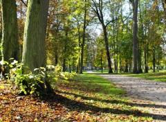 Fonds d'écran Nature automne ensoleilé