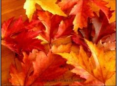 Wallpapers Nature Douceur d'automne