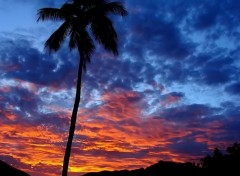 Fonds d'écran Nature Couchant amazonien