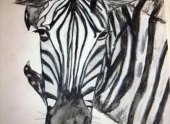 Wallpapers Art - Pencil zèbre