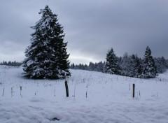 Fonds d'écran Nature le haut jura sous la neige