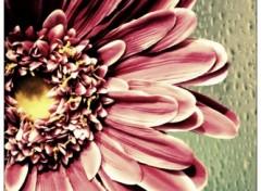 Fonds d'écran Objets Acid Flower