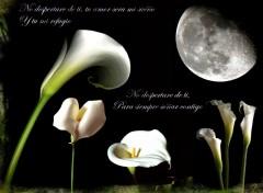 Fonds d'écran Nature moon light