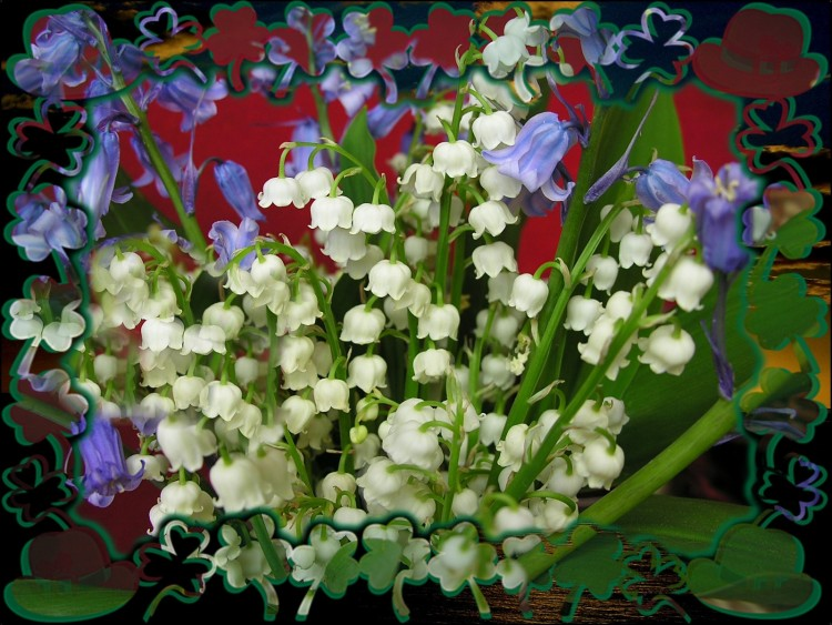 Fonds d 39 cran nature fonds d 39 cran fleurs pour tous les membres d 39 h bus par marieclaire - Catalogue de fleurs gratuit ...