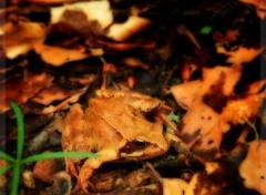 Wallpapers Animals Croaaa dans la forêt