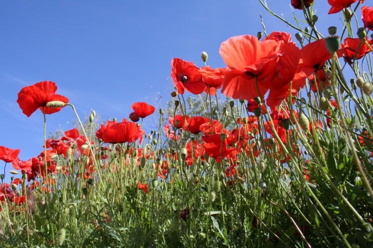 Fonds d 39 cran nature fonds d 39 cran fleurs couleurs de l for Fond ecran ete fleurs
