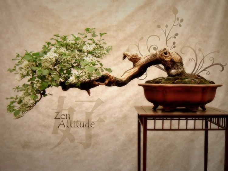 fond d'ecran zen attitude gratuit