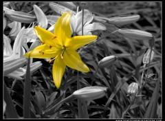 Fonds d'�cran Nature BW yellow