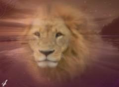 Fonds d'écran Animaux Coucher de lion