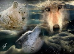 Wallpapers Animals Loups powaa