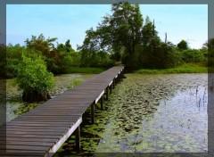 Fonds d'écran Nature Dans les marais