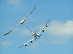 Fonds d'écran Avions ressemblance volante