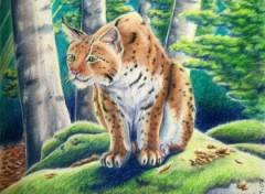 Fonds d'�cran Art - Crayon Lynx