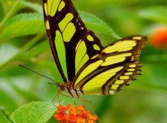 Wallpapers Animals Papillon exotique