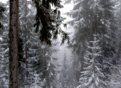 Wallpapers Nature Courchevel sous la neige