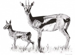 Wallpapers Art - Pencil Gazelle Et Son Jeune
