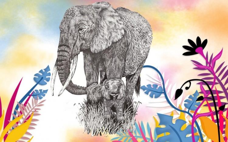 fond d'ecran gratuit elephant