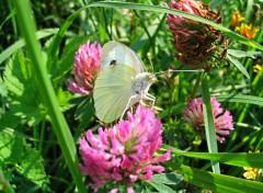 Wallpapers Animals Une fleure sous un papillon!