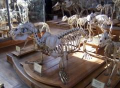 Fonds d'écran Animaux Squelette d'otarie
