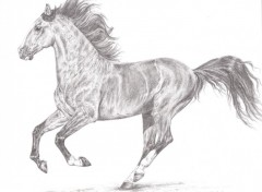 Wallpapers Art - Pencil Oxosso, Cheval Lusitanien