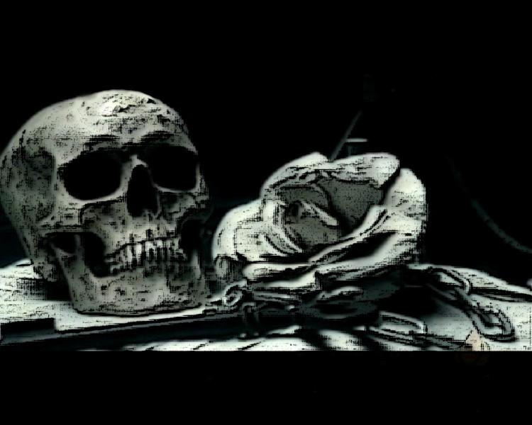 Fonds d'écran Fantasy et Science Fiction Mort skull&rose