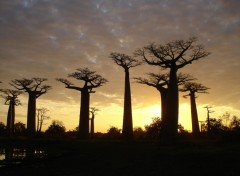 Wallpapers Trips : Africa Allée des Baobab