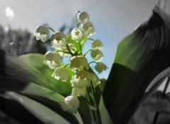Fonds d'écran Nature 1er Mai