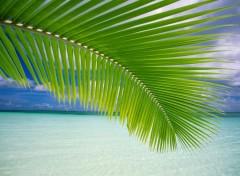 Fonds d'écran Voyages : Océanie paradis
