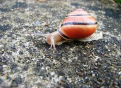 Wallpapers Animals ESCARGOT