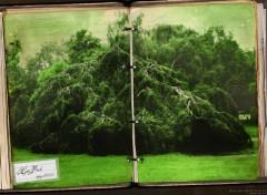 Wallpapers Trips : Europ Hyde Park