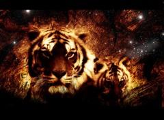 Fonds d'écran Animaux Tiger