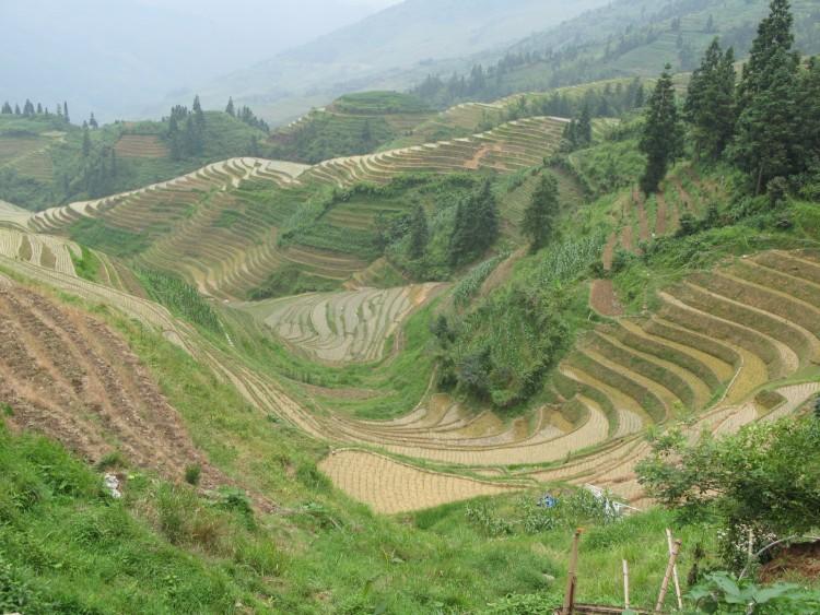 Fonds d'écran Voyages : Asie Chine riziere en terrasse