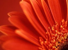 Wallpapers Nature Fleur rouge