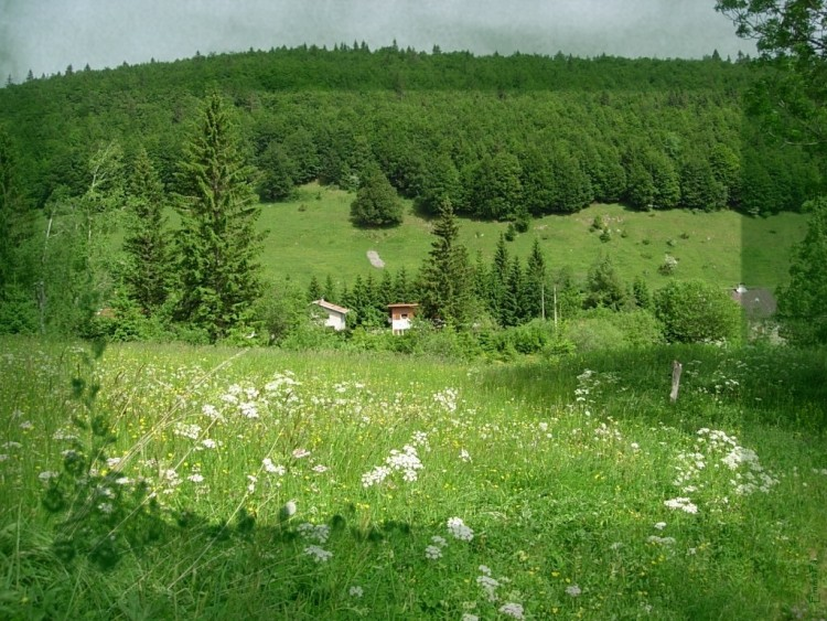 fonds d 39 cran nature fonds d 39 cran paysages le printemps par emmafa. Black Bedroom Furniture Sets. Home Design Ideas