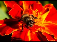 Wallpapers Animals Face à face avec une abeille