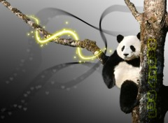 Fonds d'écran Art - Crayon panda