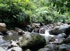 Fonds d'écran Voyages : Amérique du nord Forêt Tropicale Guadeloupéenne