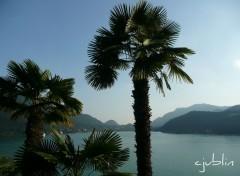 Wallpapers Nature ces palmiers contemplent ce magnifique panorama