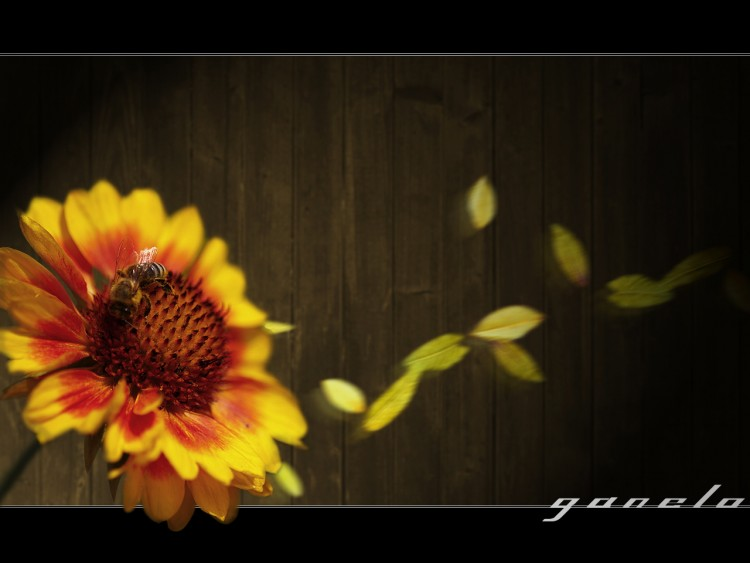 Fonds d'écran Nature Fleurs Flower Power