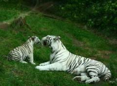 Fonds d'écran Animaux Zoo de Beauval...dept...Loir et Cher