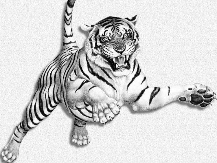 Wallpapers Animals Felines - Tigers tigre