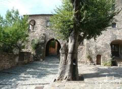 Fonds d'écran Constructions et architecture un arbre bien placé