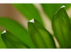 Fonds d'écran Nature La verdure d'automne