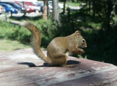Wallpapers Animals squirrel