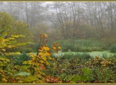 Fonds d'écran Nature La Somme et ses marécages