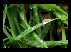 Fonds d'écran Nature Feuilles sous la pluie